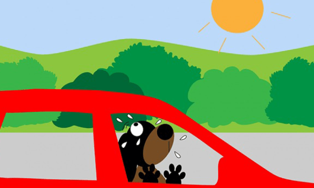 Soha ne hagyd nyáron a kutyád a zárt, parkoló autóban! Veszélyes!