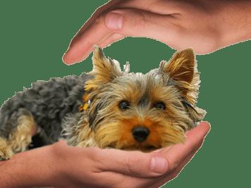 Gondoskodj a kutyádról nyáron is