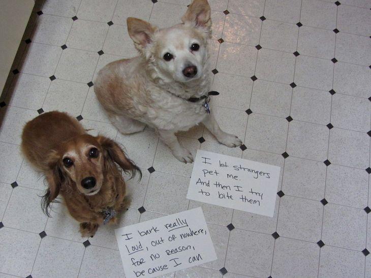 A kutya levele a gazdájához: Mit gondol a kutyád valójában Rólad!