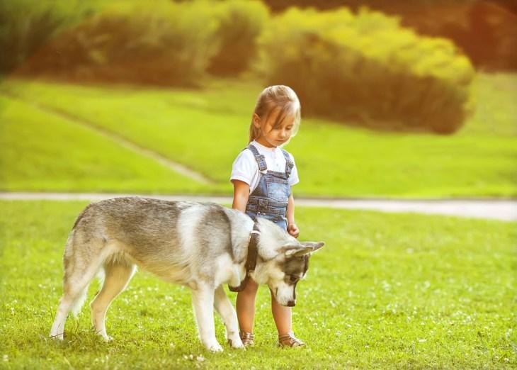 Azok a gyermekek, akikk háziállatokkal az oldalukon nőnek fel, felelősséget tanulnak