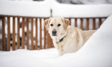 7 tévhit a kutyákról és a télről