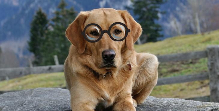 10 fontos életlecke, melyet megtanulhatunk a kutyáktól