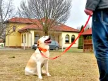 Kutya oktató videó - Helyben maradás