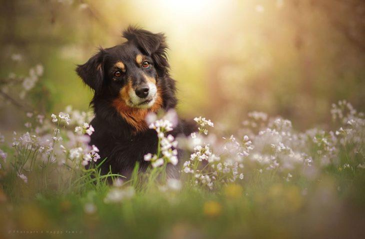 Természet, virágok és bnoldog mosoly