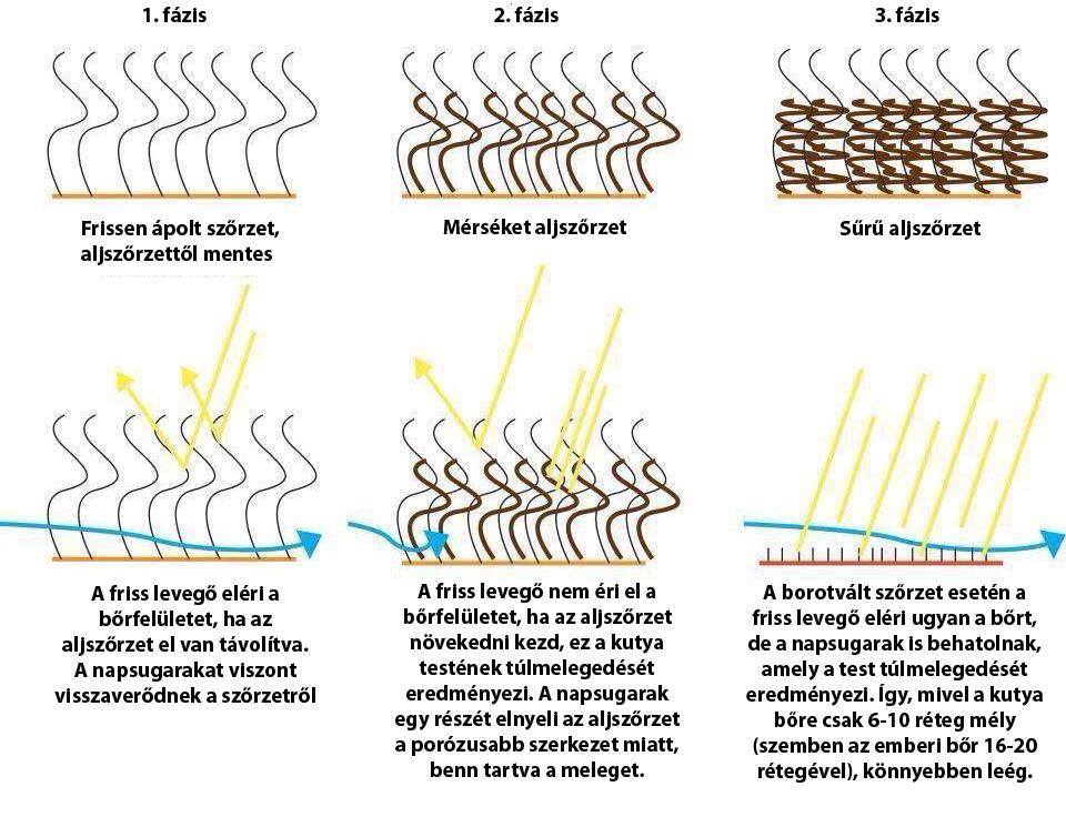 A dupla bevonatú fajták szőrének hatásmechanizmusa