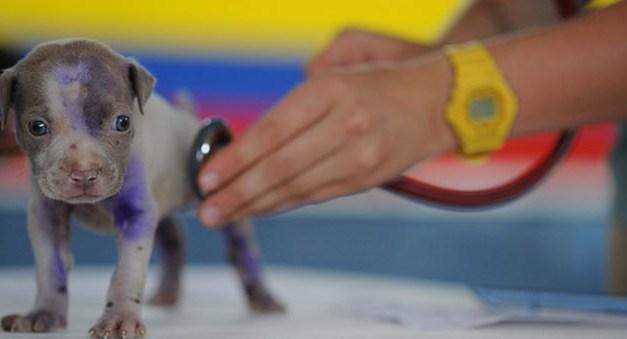 Dr. Túri Ákos – kisállatgyógyász klinikus szakállatorvos – Kecskemét