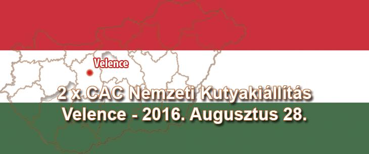 2 x CAC Nemzeti Kutyakiállítás – Velence – 2016. Augusztus 28.