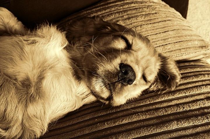 Miért alszanak háton fekve a kutyák?