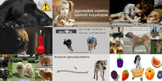 Kutya Portál TOP 10