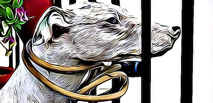 Az állatkínzás, mint bűncselekmény