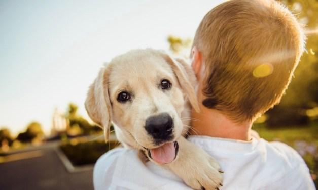 A rák kockázatának csökkentése kutyádnál