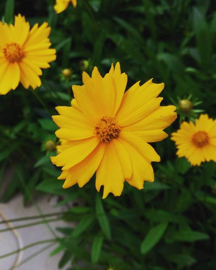 Flowers, Wayne Gakuo