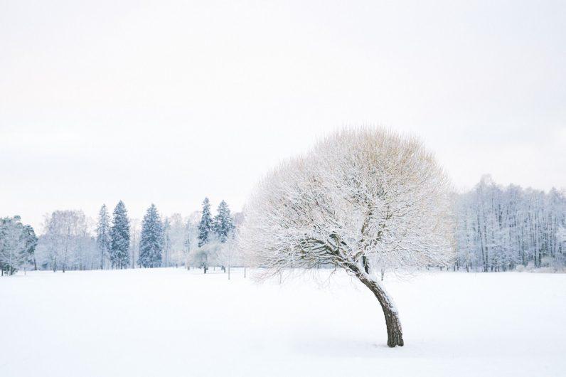 Talvinen puu Helsinki