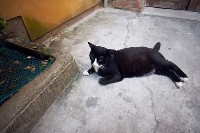 Cat lying on concrete