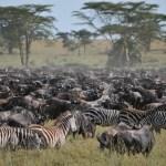 8 Day Tour to Serengeti and Ngorongoro Crater