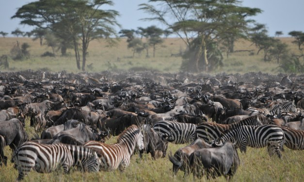8 Day Tour to Serengeti and Ngorongoro Crater