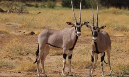 2 Day Camping Safari Tarangire and Ngorongoro