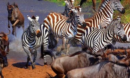 8 Day Adventure in Serengeti, Ngorongoro