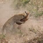 5 Day Luxury Safari to Tarangire, Serengeti and Ngorongoro