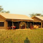 7 Day Camping to Serengeti,Ngorongoro and Tarangire