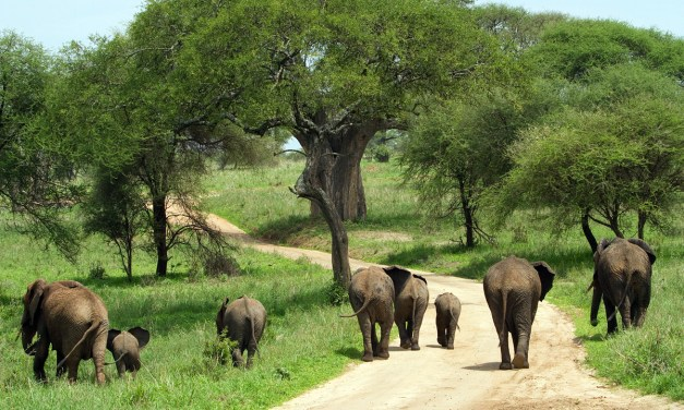 2 Day Luxury Safari to Tarangire and Ngorongoro