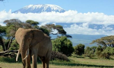 12 days Climb Kilimanjaro and Safari to Serengeti