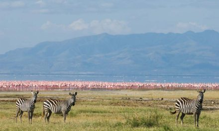 1 Day Trip to Lake Manyara
