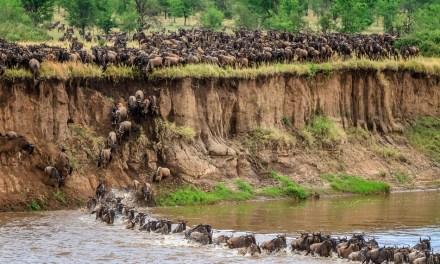10 Day Tour, Serengeti Wildebeest Migration