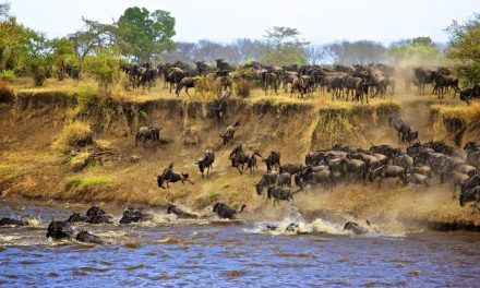 6 Day Tour to Serengeti/ Tarangire/Ngorongoro