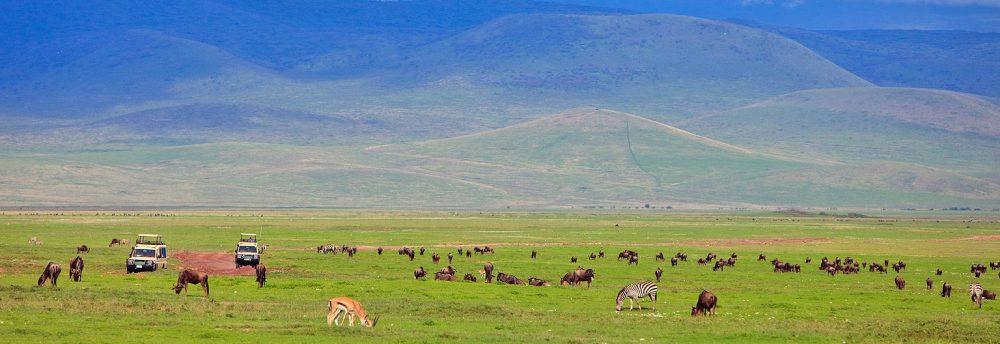 2 Day Safari and Kilimanjaro day trip