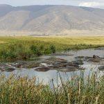 1 Day Tanzania Safari Tour /Ngorongoro, For Us$ 295/Person