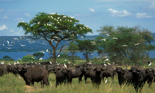 Uganda Safari -14-Days