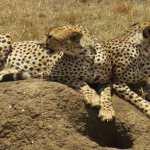 2 Days Safari-Manyara and Ngorongoro