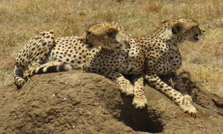 2 Days Safari-Manyara and Ngorongoro
