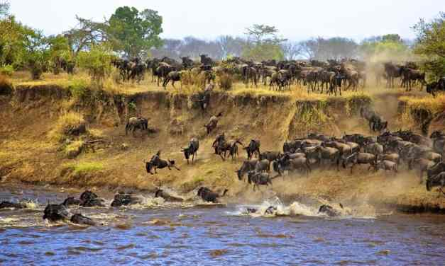 10 Day Tour, Serengeti Wildebeest Migration