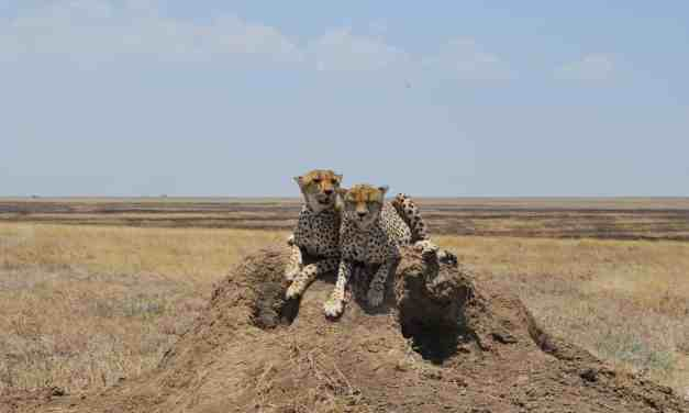 Tanzania Luxury Safari Tarangire and Manyara