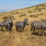 Saanane National Park