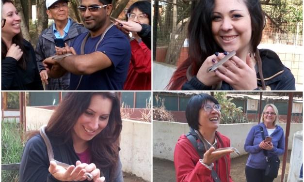 Day Tour To Meserani Snake Park