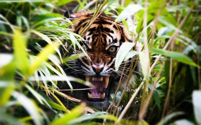 Jenis Phobia Binatang Liar