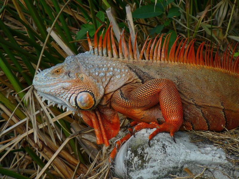 www.slitheringserpents.yolasite.com