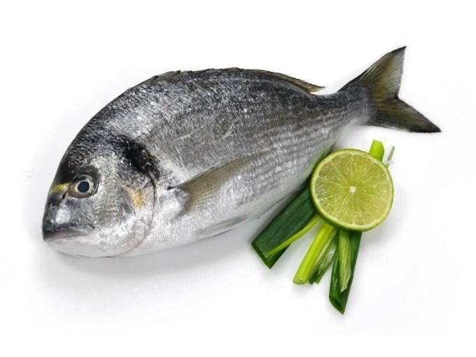 Jenis Ikan Laut - Ikan Kapas