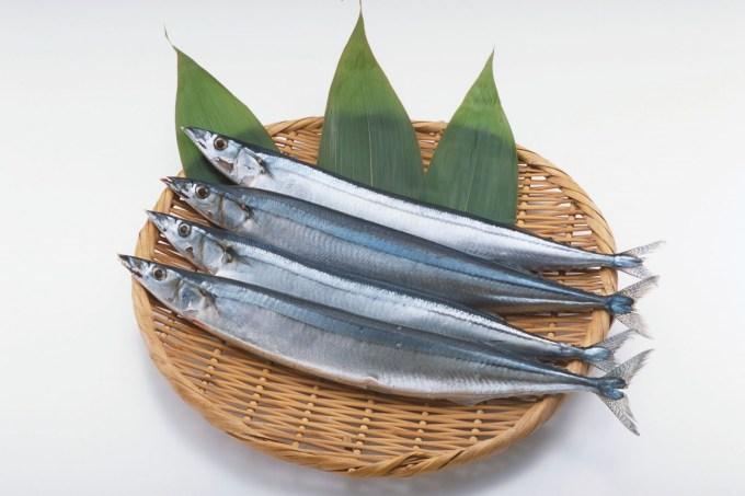 Jenis Ikan Laut - Ikan Sauri Pasifik