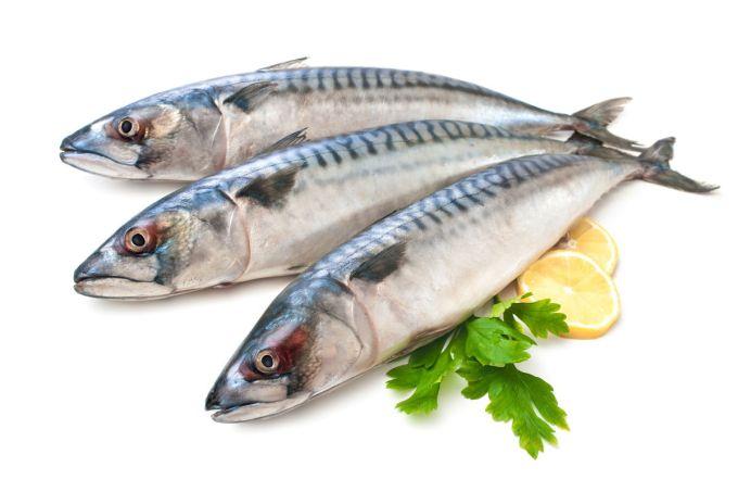 Gambar Jenis Ikan Laut Tenggiri