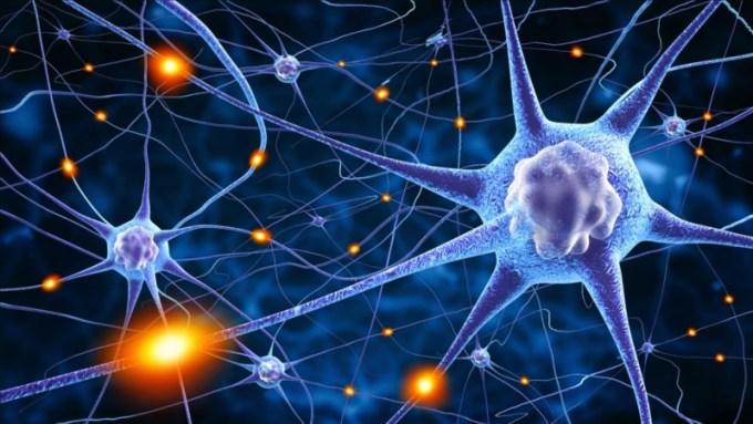 Tips Efektif untuk Meningkatkan Tingkatan IQ Seseorang
