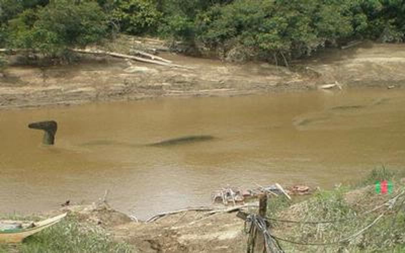 Penampakan Naga Sungai Mahakam