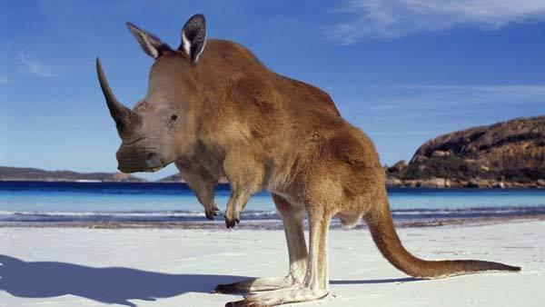 badak-kangguru