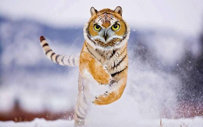 harimau-hantu