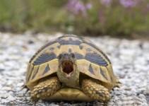 Mengenal Jenis Kura-kura Darat