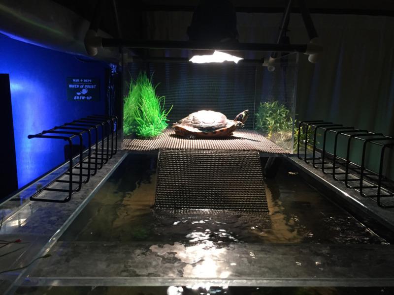 Sediakan Lampu Dalam Aquarium Kura Kura