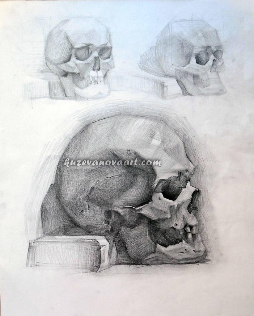 Educational work. Skull.